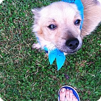 Adopt A Pet :: Macabee - Boerne, TX