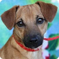 Adopt A Pet :: TAKI - Red Bluff, CA