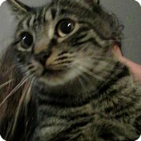 Adopt A Pet :: Abby - Eureka, CA
