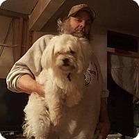 Adopt A Pet :: Sasha(PENDING) - Inver Grove, MN