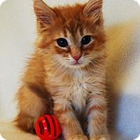 Adopt A Pet :: Bugsy - Toccoa, GA