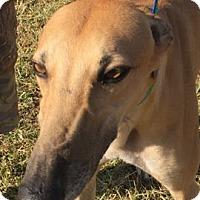 Adopt A Pet :: Cher - West Palm Beach, FL