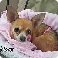 Adopt A Pet :: Klover - DuQuoin, IL