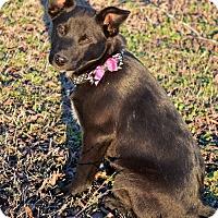 Adopt A Pet :: Cammy - Westport, CT