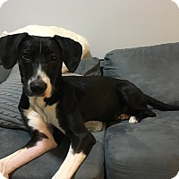 Adopt A Pet :: CHARLIE - Williamsburg, VA