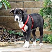 Adopt A Pet :: Cher - San Diego, CA