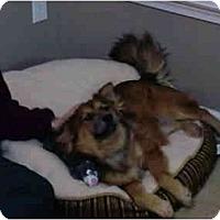 Adopt A Pet :: Dancer - Mocksville, NC
