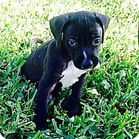 Adopt A Pet :: Hans - Miami, FL
