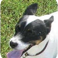 Adopt A Pet :: TYSON - Scottsdale, AZ