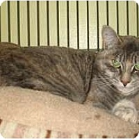 Adopt A Pet :: Tiger Lily - Shelton, WA