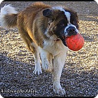 Adopt A Pet :: THUNDER - Glendale, AZ