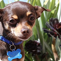 Adopt A Pet :: Timmy - San Francisco, CA