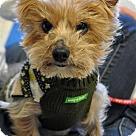 Adopt A Pet :: Tooters