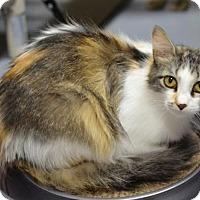 Adopt A Pet :: Diana150916 - Atlanta, GA