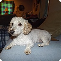 Adopt A Pet :: Peru - Quincy, IN