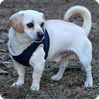 Adopt A Pet :: Tator Tot - Saratoga, NY