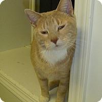 Adopt A Pet :: Jackson - Hamburg, NY