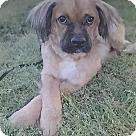 Adopt A Pet :: Luki