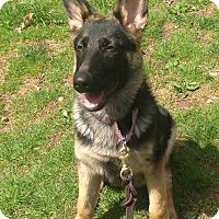 Adopt A Pet :: Issac - Nanuet, NY