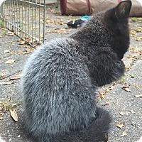 Adopt A Pet :: Porcupine $20 - Lincolnton, NC