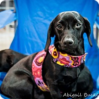 Adopt A Pet :: Wyatt - Henderson, NV