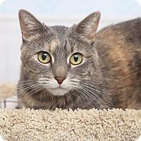 Adopt A Pet :: Tootsie - Chippewa Falls, WI