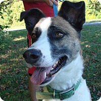 Adopt A Pet :: Wally - Erwin, TN