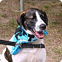 Adopt A Pet :: Andy Griffith - Richmond, VA