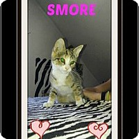 Adopt A Pet :: Smore - Highland, MI