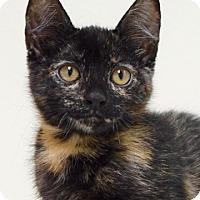 Adopt A Pet :: Amanda - Dublin, CA