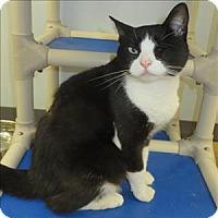 Adopt A Pet :: Wink - Indiana, PA