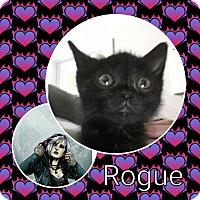 Adopt A Pet :: Rogue - joliet, IL