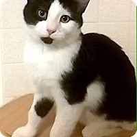 Adopt A Pet :: Shizuko - Lake Elsinore, CA