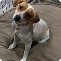 Adopt A Pet :: Prada - Apache Junction, AZ
