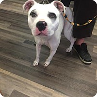 Adopt A Pet :: Winston - Adrian, MI