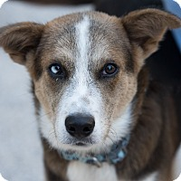 Adopt A Pet :: Tucker - Daleville, AL