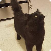Adopt A Pet :: Jett - Boston, MA