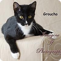 Adopt A Pet :: Groucho - Oklahoma City, OK