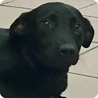 Adopt A Pet :: Verona - Las Vegas, NV