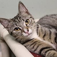 Adopt A Pet :: Cash - Jackson, MS
