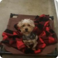 Adopt A Pet :: Alvin - Thousand Oaks, CA