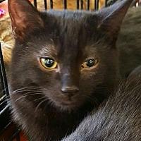 Adopt A Pet :: Fuzzy - Lyons, IL