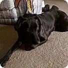Adopt A Pet :: Cynder