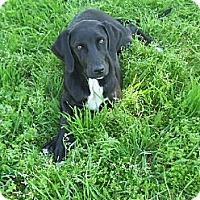 Adopt A Pet :: Dame - Salem, NH