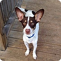 Adopt A Pet :: Radar - Woodlawn, TN