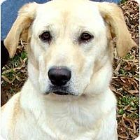 Adopt A Pet :: SADIE - Wakefield, RI
