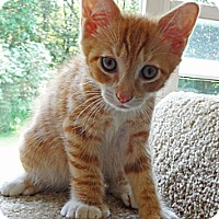 Adopt A Pet :: Reed - N. Billerica, MA
