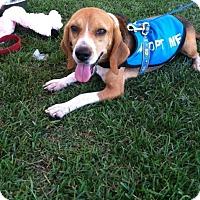 Adopt A Pet :: JoJo - Edisto Island, SC