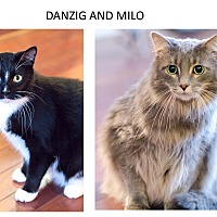 Adopt A Pet :: Danzig & Milo - Chicago, IL