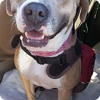 Adopt A Pet :: Mina - Inverness, FL